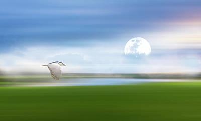 Stork Mixed Media - Mist On The Bayou by Georgiana Romanovna