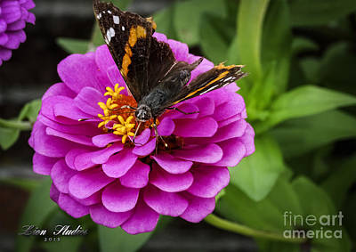 Mister Butterfly On A Pink Flower Print by Melissa Messick