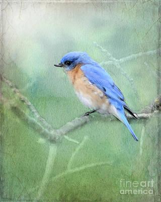 Bluebird Digital Art - Misty Blue by Betty LaRue