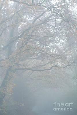 Misty  Print by Gary Bridger
