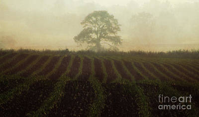 Painterly Photograph - Misty Morning by Robert Brown