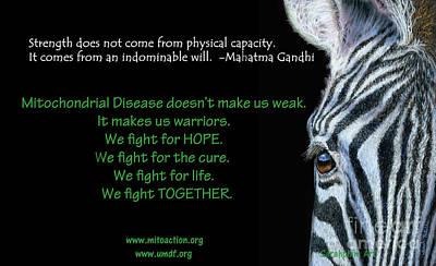 Zebra Mixed Media - Mito Awareness Zebra by Sarah Batalka