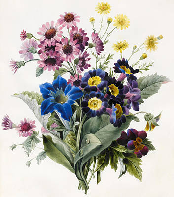 Aster Drawing - Mixed Flowers by Louise D'Orleans