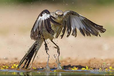 Mockingbird Digital Art - Mockingbird Take Off by Jerry Fornarotto