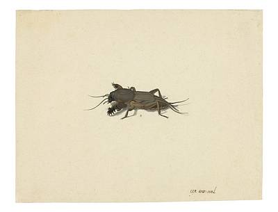 Nature Painting - Mole Cricket by MotionAge Designs