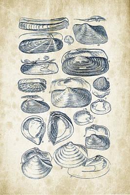 Sea Shells Digital Art - Mollusks - 1842 - 03 by Aged Pixel