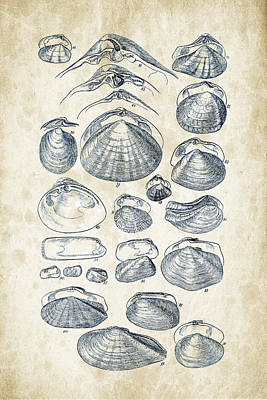 Mollusks - 1842 - 04 Print by Aged Pixel