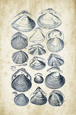 Mollusks - 1842 - 05 Print by Aged Pixel