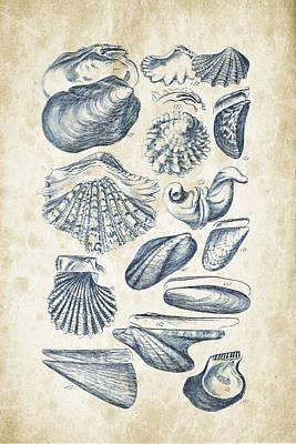 Sea Shells Digital Art - Mollusks - 1842 - 09 by Aged Pixel