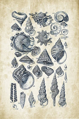 Old Paper Digital Art - Mollusks - 1842 - 16 by Aged Pixel