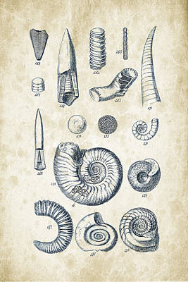Sea Shells Digital Art - Mollusks - 1842 - 22 by Aged Pixel