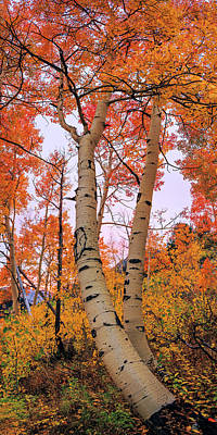 Vertical Photograph - Moments Of Fall by Chad Dutson