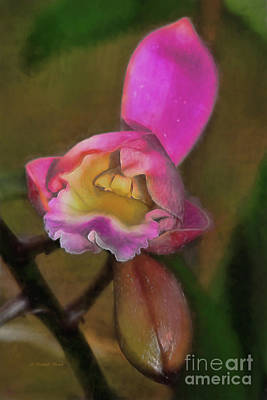 Ant Painting - Mom's Orchid by Deborah Benoit