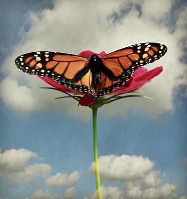 Monarch Butterfly Print by Chris Berry