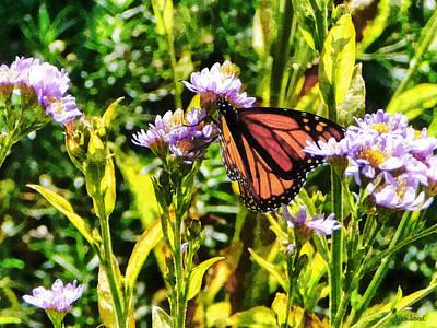 Monarch Butterfly On Purple Wildflower Print by Susan Savad