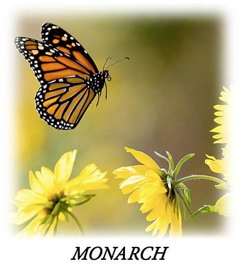 Butterfly Photograph - Monarch Butterfly T-shirt by Rospotte Photography