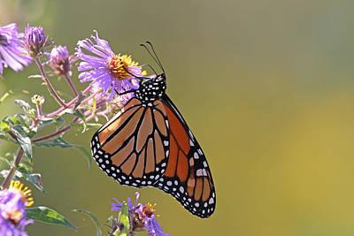 Jim Nelson Photograph - Monarch by Jim Nelson