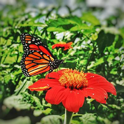 Monarch Of The Flowers  Print by Jame Hayes