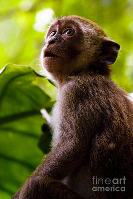 Mystifying Photograph - Monkey Awe by Jorgo Photography - Wall Art Gallery