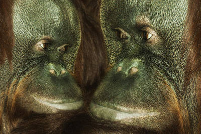 Orangutan Digital Art - Monkey Love by Jack Zulli