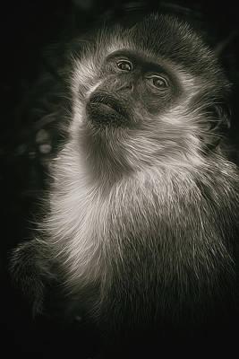 Monkey Portrait Print by Laura Macky