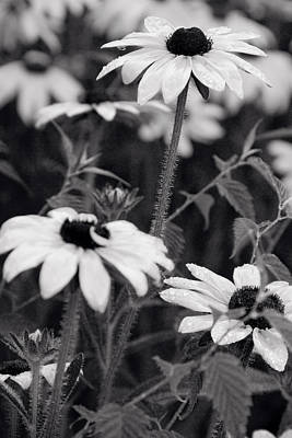 Floral Photograph - Monochrome Flowerbed by Lise-Lotte Larsson