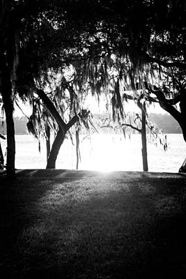 A Summer Evening Landscape Photograph - Monochrome Spanish Moss by Shelby Young