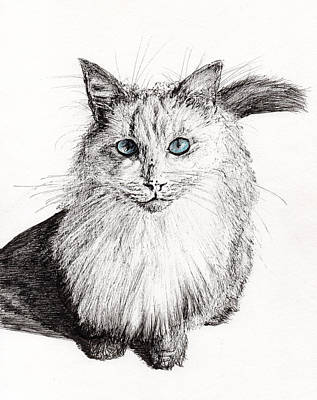 Cats Drawing - Monty by Vincent Alexander Booth