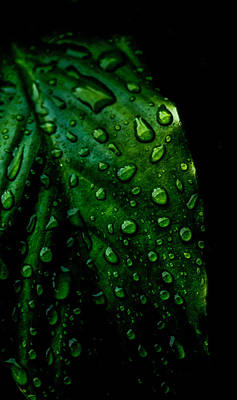 Wet Leaves Photograph - Moody Raindrops by Parker Cunningham