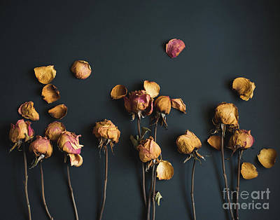Photograph - Moody Roses I Floral Still Life by Sonja Quintero