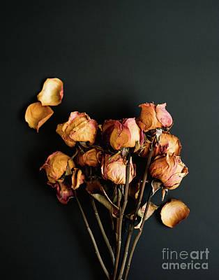 Photograph - Moody Roses II Still Life Photo by Sonja Quintero