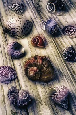 Moody Sea Shells  Print by Garry Gay