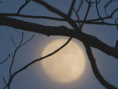 Moon Glow Print by Lindie Racz
