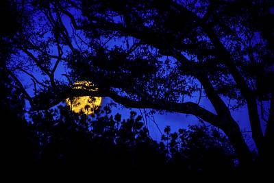 Beauty Mark Photograph - Moon Harvest by Mark Andrew Thomas