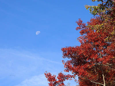 Becky Photograph - Moon In Blue Sky With Red Leaves by Becky Erickson