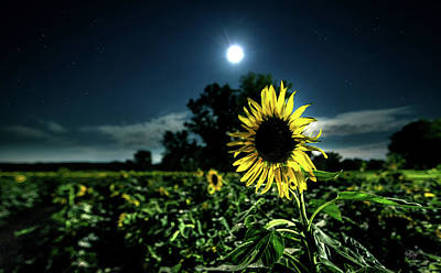 Moonlit Night Photograph - Moonlighting Sunflower by Everet Regal