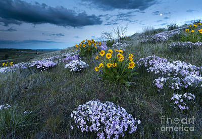 Phlox Photograph - Moonrise Over Snow Mountain Ranch by Mike Dawson