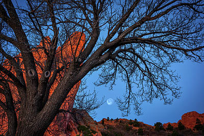 Moonset In The Garden Print by Darren White