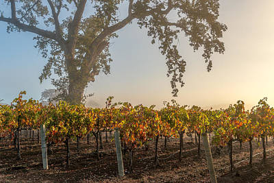 Winery Photograph - Morning Attraction by Joseph Smith