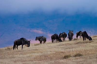 Africa Photograph - Morning In Ngorongoro Crater by Adam Romanowicz