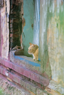 Cambodia Photograph - Morning In The Temple A Cats Perspective by Mike Reid