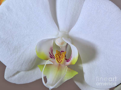 Autumn Photograph - Morning Orchid by Angelo DeVal