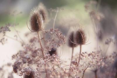 Morning Softness. Wild Grass Print by Jenny Rainbow