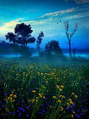 Environement Photograph - Morning Song by Phil Koch