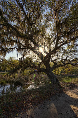 Edisto Photograph - Morning Sun Through The Oak by Rick Berk