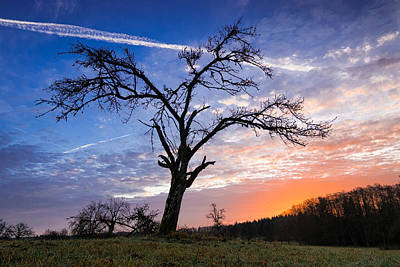 Bare Trees Photograph - Morning Sunrise With Tree by Matthias Hauser