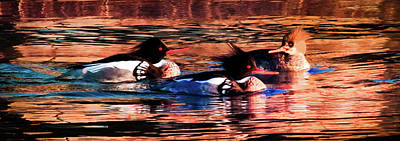 Wild Ducks Photograph - Mornings Of Gold by Karen Wiles
