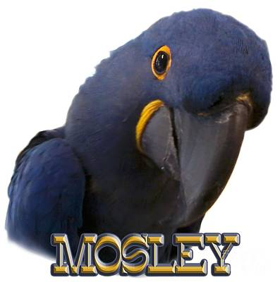 Macaw Digital Art - Mosley by Zazu's House Parrot Sanctuary