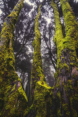 Moss Covered Tree Print by Marco Oliveira