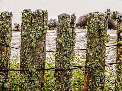 Moss On A Wintery Fence Print by Lexa Harpell